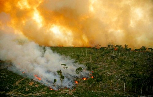 Master Conservationist understand why rain forest destruction is causing more global warming, more dead coral reefs, more storms and flood - learn online how weather works and learn what you can do to secure the future of your children, why land conservation is important - after completing Bear Springs Blossom nature education distance learning courses you are a master conservationist who understands how nature works