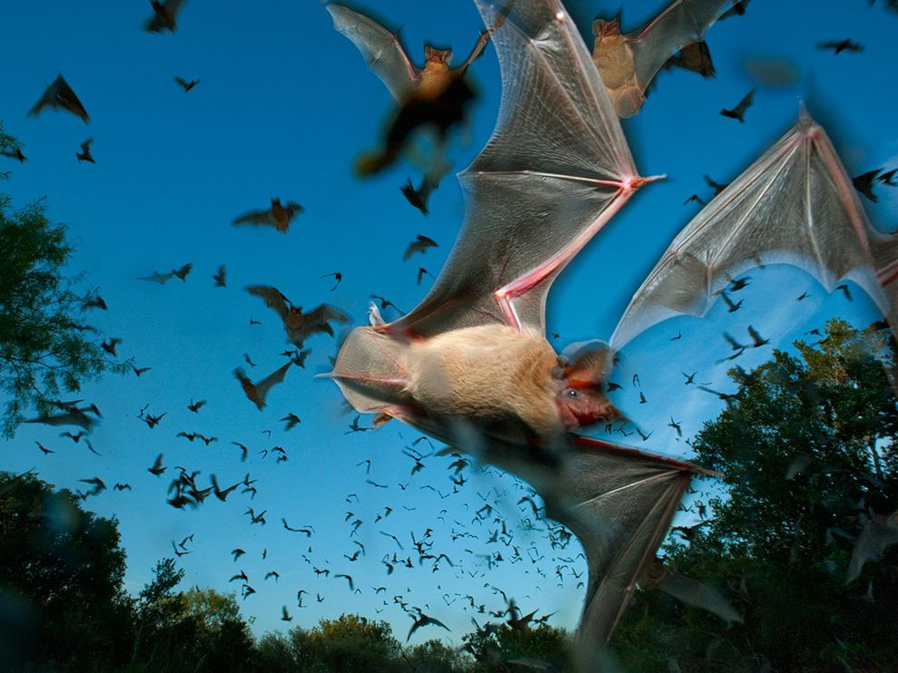 20 million Brazilian free-tailed bats live in the Bracken cave