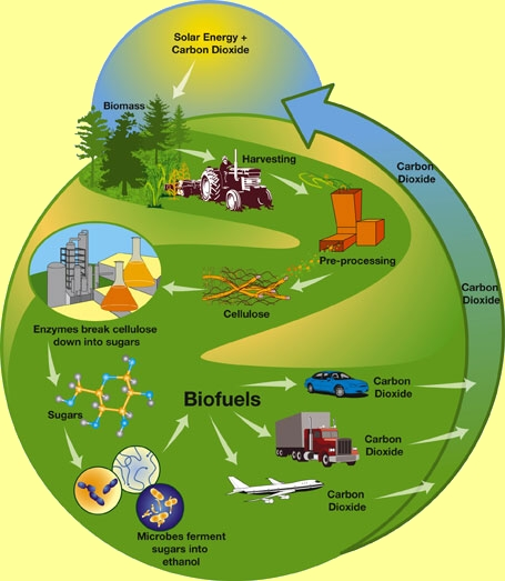 Biomass providing renewable energy for Uses of solar energy for kids