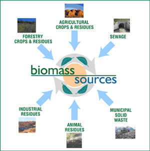 there are many different sources on biomass, biomass is material for dead plants and its decay