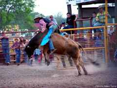 Bandera Rodeo bull rider show off, who is the best western bull rider