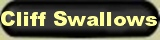 Conservation education Fauna: Cliff swallows eating insects while flying. Bear Springs Blossom Nature Conservation nature encyclopedia websites provide facts about the migratory Cliff swallows, how to protect birds. Update your nature education to be a good conservationist