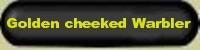 Golden cheeked Warbler, an endangered bird, breeds in the Texas Hill Country - no other place on earth. Golden cheeked Warblers need Texas Hill Country trees, plants, mature junipers to build a nest. B+S+B nature reserve preserves habitat for Golden cheeked Warbler = GCW - Nature conservation, nature education is important to live in harmony with nature, to protect globally endangered species through international nature protection programs