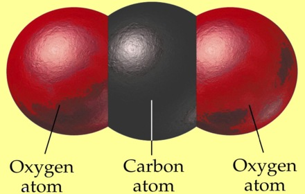 carbon dioxide molecule, one carbon atom and two oxygen atoms
