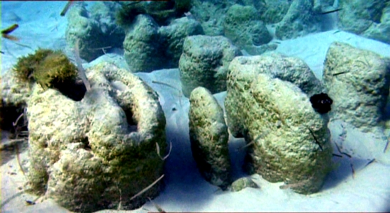 BSB conservation education info: dying coral reef, learn online about nature conservation, update your nature education