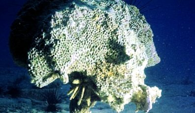 acid water destroy calcium in corals. Coral reefs are the kindergarten of almost all sea life
