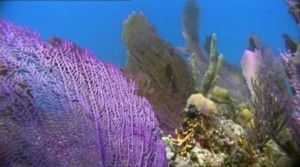 coral reefs are dying. CO2 acidic ocean water, silt, man made chemicals: nature conservation is the only response to protect humans future, lowering ocean acidification