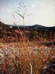 Texas Hill country mountain carved by erosion and the Bear Springs Creek, the Pipe Creek, Bear Creek