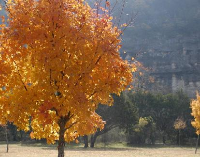 Nature naturally colors in fall. See trees in fall colors at Bear Springs Blossom Nature Preserve in Pipe Creek TX Bandera County