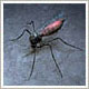 media image about mosquito control