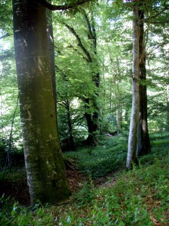 A beautiful forest in Kellmuenz Germany. A huge biodiversity in plant life, animals life, varieties of trees open to the public to enjoy Nature, to enjoy wildflowers and wildlife