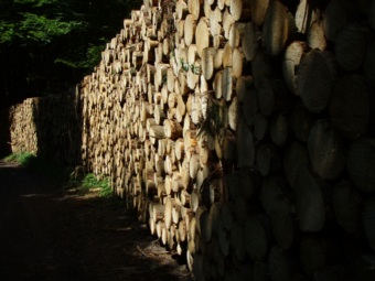 tree trunks are used for building, for furniture, for fences, byproducts can be shredded for paper manufacturing