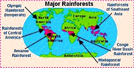 Temperate rainforest map world map of tropical and temperate rain