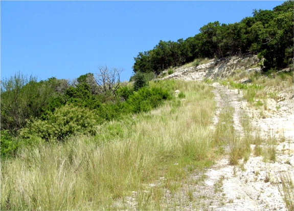 This was the look of the former county road 2 years later - mulched - low erosion - renaturated