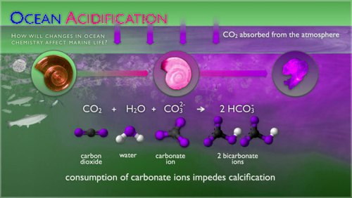 graphic showing chemical reaction of Earth oceans to rising carbon dioxide levels in Earth atmosphere. lime is dissolved by acid, coral reef structures are dissolved by acid, oysters shells are destroyed by higher ocean acidity