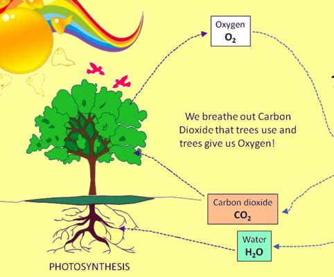 BSB Chemistry education online: humans breathe in oxygen and breathe out carbon dioxide co2, a greenhouse gas