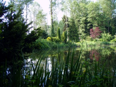 A man thought: How would it look like if I plant some trees, dig out a pond