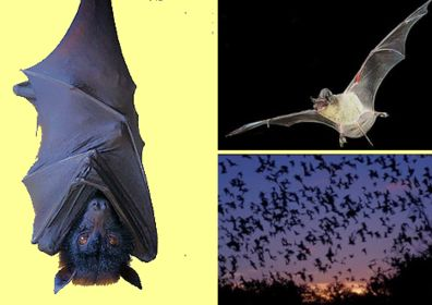 Conservation views and insights: protecting bats helps to lower the costs of fighting insects. Wild animal conservation: Bear Springs Blossom Nature Conservation, protection of all life, flora + fauna on Earth = human protection, conservation of all water on Earth = human protection, conservation of all soil on Earth = human protection. Millions of years earth balanced a natural environment. Global warming endangers the energy balance. Conservation of all water on Earth = human protection, conservation of all soil on Earth = human protection through affordable conservation education online to keep nature beautiful. The over-use of pesticides, and poisonous man-made chemicals is causing a decline in biodiversity, many bats die. Learn online about conservation education, how to keep Nature beautiful. Earth is endangered by pollutants: Polluted air, polluted water, polluted soil, contaminated food endangers life. Humans need Nature conservation to stay healthy, protected from chemical pollution. Nature Conservation to protect air + water + soil + food + wildlife + domestic animals. Millions of years earth balanced a natural environment, changed earthquake pattern caused by climate change. BSB-research + how to keep Nature beautiful + how to secure our future + how to have a better life!