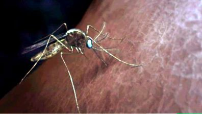 a real mosquito sitting on a human body. Standing water attracts mosquitoes. Conservation of all water on Earth = human protection, conservation of all soil on Earth = human protection through affordable conservation education online to keep nature beautiful. Earth is warming up, global temperatures are climbing, pollution is causing global warming, learn online about nature conservation, how to secure your future, how to stay alive with violent weather, floods, earthquakes storms. Life on earth depends on plants, that produce oxygen, provide food. Nature conservation keeps Earth beautiful. BSB Conservation views and insights: Life on earth depends on plants. Affordable nitrogen fertilizer can expand food production. Millions of years earth balanced a natural process of growing and mulching. Photosynthesis is essential for Earth's oxygen production. Erosion is the biggest threat to plants, to human food. Humans need Nature conservation to stay healthy, protected from chemical pollution. BSB Nature Conservation to protect air + water + soil + food + wildlife + domestic animals. Millions of years earth balanced a natural environment. BSB pollution information explains how pollution has changed earthquake patterns caused by climate change. United southern States have a mosquito problem. Standing water is a good breeding ground for mosquitoes, spreading diseases, endangering humans. low education levels resulting in low prevention, high pollution, low water quality. Low education levels resulting in high pollution, low water quality. Nature conservation is needed to keep nature beautiful. Great Britain needs updated conservation education programs, more conservation education workshops + lessons. Industry can lower air pollution + water contamination using updated conservation methods to preserve Nature. Schools offer updated science based facts, tips, advice addressing global environmental issues as pollution, recycling, how to keep Nature beautiful. volunteers are the life blood of Bear Springs Blossom Nature Conservation. We all are volunteers, working without a salary. BSB research clearly shows: warmer temperatures help to grow bigger mosquito populations. Earth is warming up, global temperatures are climbing, pollution is causing global warming. Global warming is changing life on Earth, warmer water expands, reducing the space people can live. Learn online how to deal with warmer temperatures, how to secure your future, how to stay alive with violent weather, floods, earthquakes, storms - all caused by global warming. Life on earth depends on plants, that produce oxygen, provide food. Millions of years earth balanced a natural environment. Mosquitoes can carry diseases, dangerous to humans and animals. See our lecture about the life cycle of mosquitoes. Humans need Nature conservation to stay healthy, protected from chemical pollution. BSB climate info: Millions of years earth balanced a natural environment, changed earthquake pattern caused by climate change. Online distance learning conservation education. Videos about how to keep earth beautiful - Bear Springs Blossom Nature Conservation. BSB-research shows videos how to keep Nature beautiful + how to secure our future + how to have a better life!