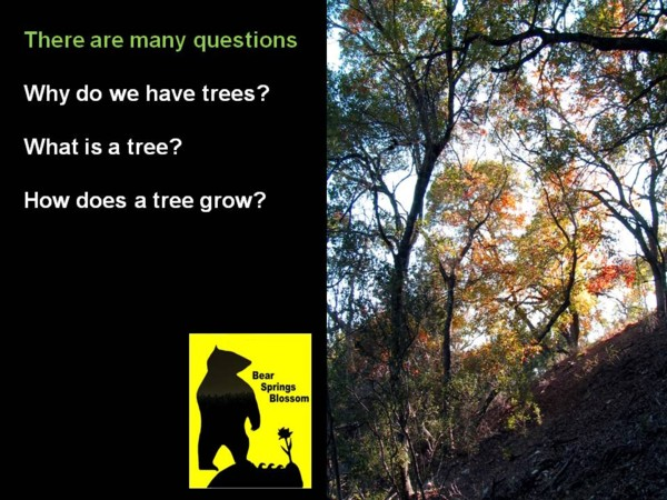 BSB Conservation education online lecture Passion for trees: why do we need trees, why forests are an important environment, what is a tree, tree food, trees photosynthesis, wood products, tree medicine, tree hold water, tree prevent erosion. Some of these trees are over 1000 years old. The trunks are often more than 100 feet around! Beneath the canopy is the under-story. In this layer are found small shade-loving trees, trees for riparian protection