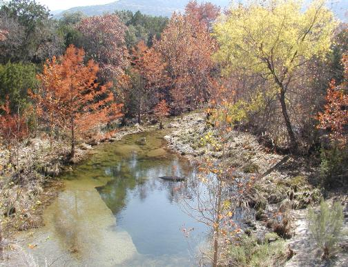 trees in natural fall color at nature preserve in eastern Bandera County, nature in its best, kept natural