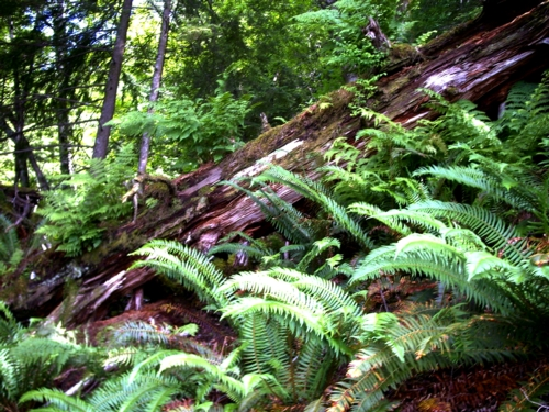 ferns are found everywhere in the tropical and temperate rainforest