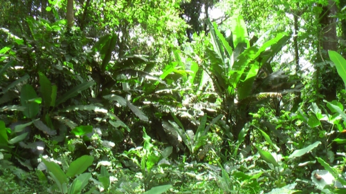 rainforest trees leaves build a thick layer on the ground creating a very special environment