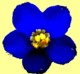 Bear Springs Blossom online Nature education class: Flowers, flower blossoms, native wildflowers, native grasses are all needed for wildlife to survive