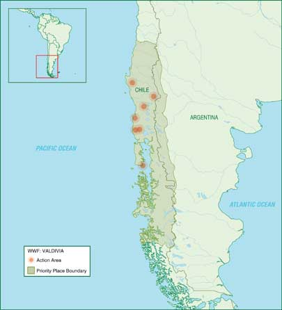 Geography map: Valdivia temperate rain forest in Chile South America, very special rain forest with trees older than 4000 years