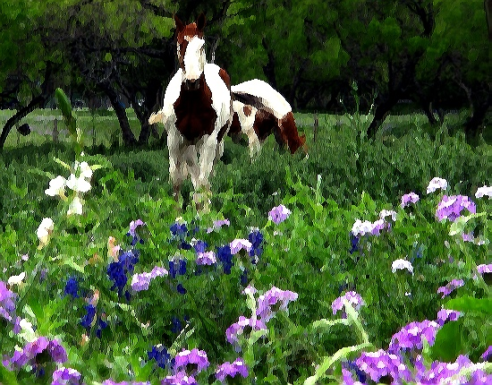 nature is art, painting of wildflowers and horses, artistic light catchment, art and nature, a perfect combination