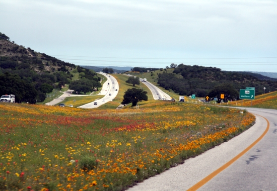 wild yellow flower meadows in spring Texas Hill Country along Highway and farm roads