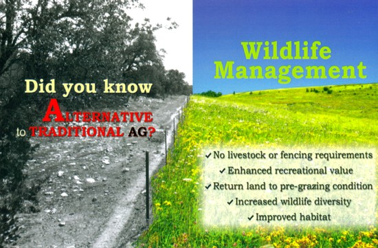 responsible humans choose wildlife management plans to keep the damage of animals at a minimum. Bear Springs Blossom gives advice on Wildlife management