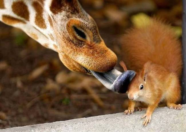 BSB Conservation education international with a special look at a zoo: giraffe hugs squirrel. Bear Springs Blossom Nature Preserve in the Texas Hill Country restores nature for future generation, so plant life and wildlife can balance our environment